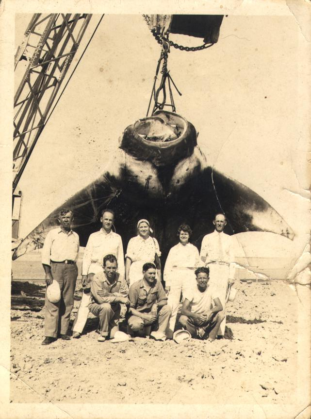 Giant Manta caught off South Padre Island circa 1950s